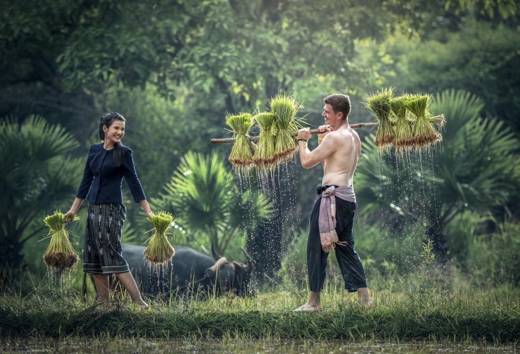 Man and womanfully laughing and working in a farm